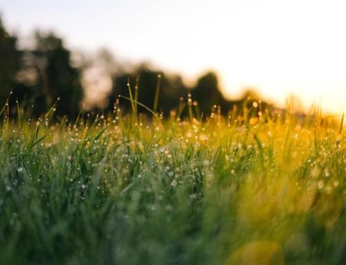 Zašto je rosište važno?